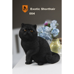 Exotic Shorthair Cat (Black)