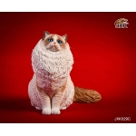Seal Mitted Ragdoll Cat (White)